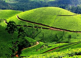 Cabs from Kochi(Cochin) to Ooty